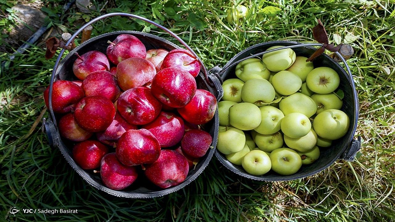 افت ۲۰ درصدی قیمت میوه های نوبرانه در بازار/ گوجه فرنگی ارزان شد
