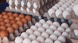 قیمت هرشانه تخم مرغ بیش از ۵۰ هزار تومان