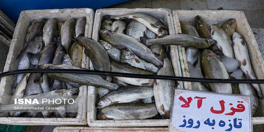 ماهی قزل آلا و سالمون گران شد