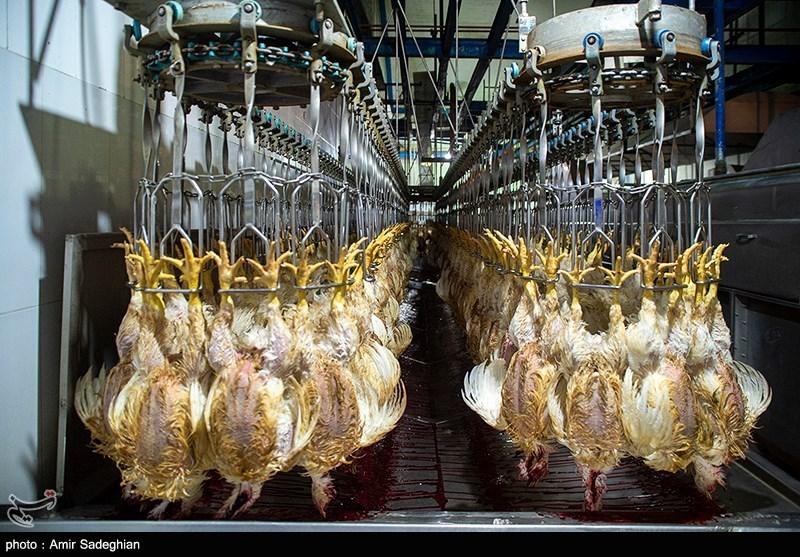 واردات هفتگی ۳ تا ۵ میلیون تخم مرغ نطفه دار گوشتی/ مرغ مهره ماه ارزان میشود