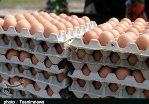 هر عدد تخم مرغ ۱۷۰۰ تومان شد