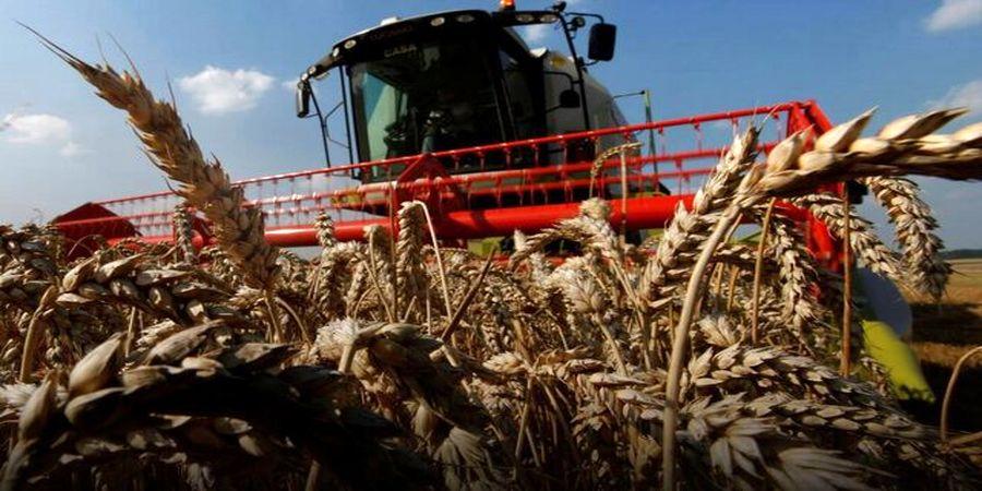 رویترز: ایران به واردات هشت میلیون تن گندم نیاز دارد